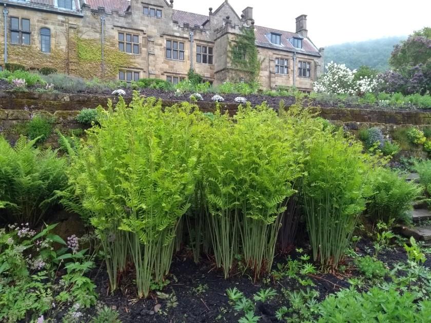 sheila-v-ferns-at-mount-grace-priory