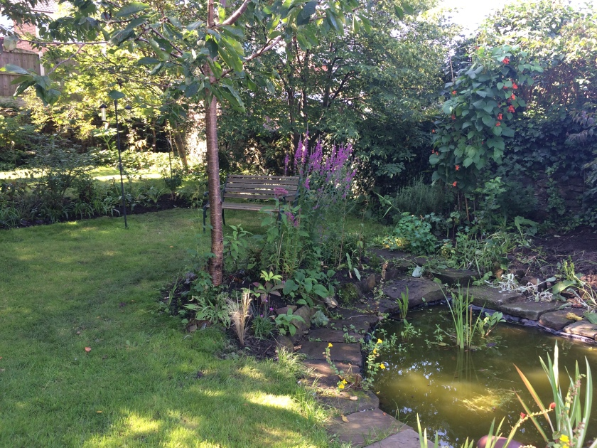 Lesley's garden 2