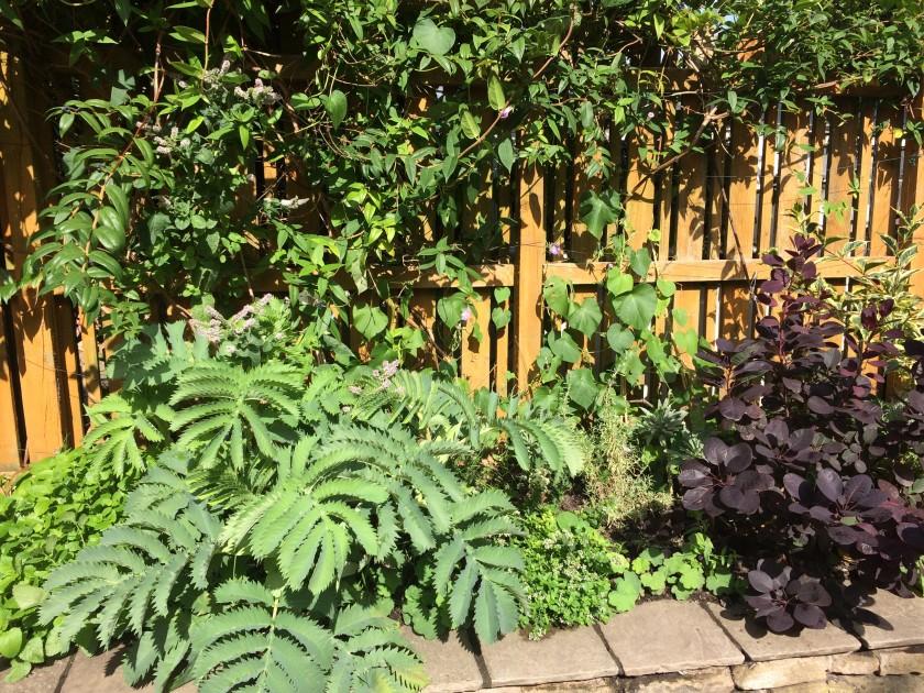 Lesley's garden 3