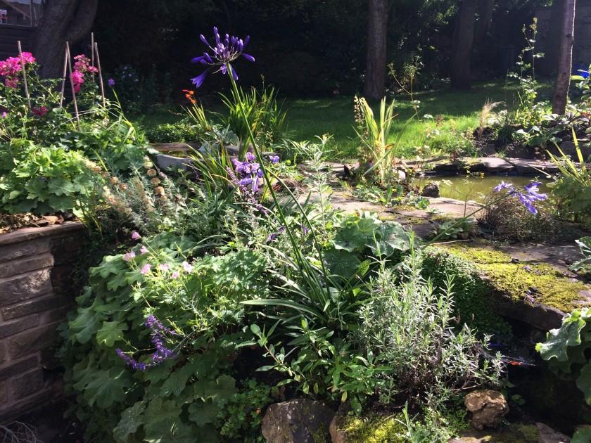 Lesley's garden 4