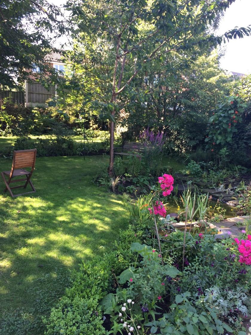 Lesley's garden