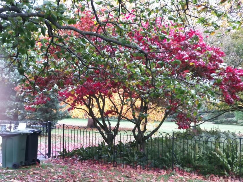 Pauline's Greenwich Park.jpg