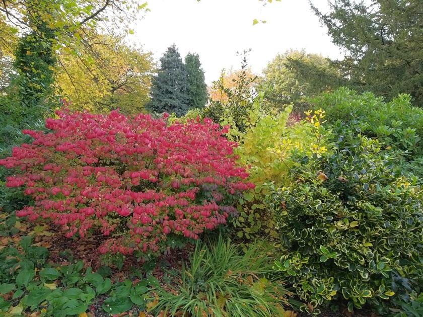 Pauline's Wentworth Garden Centre A