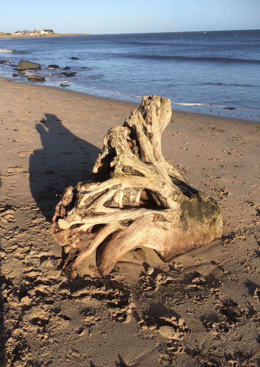 Glynis's driftwood on Alnmouth beach A