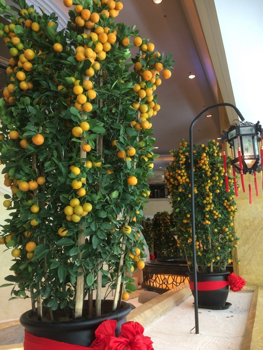 Glynis's Kuala Lumpur hotel lobby orange trees A