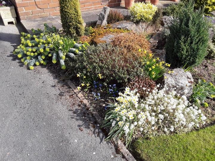 Meg's garden 1 A