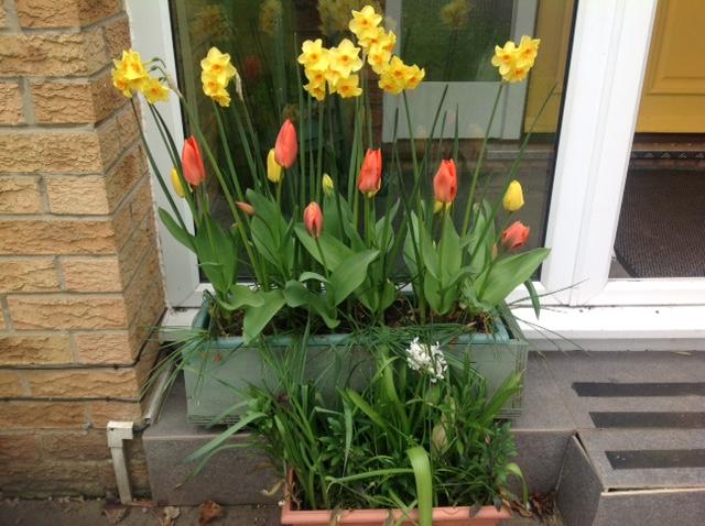 Eileen's planter 1