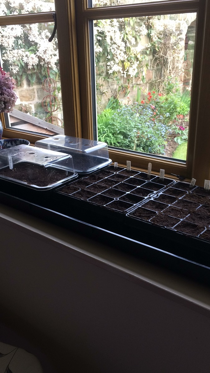 Glynis's seed trays A