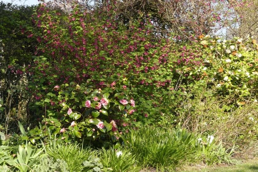 Hugh's garden view
