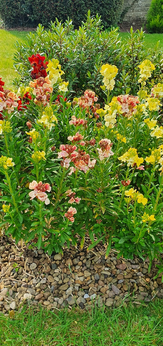 Julie's wallflowers A