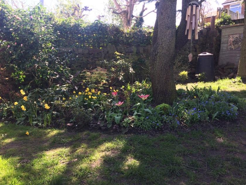 Lesley's garden 1 A