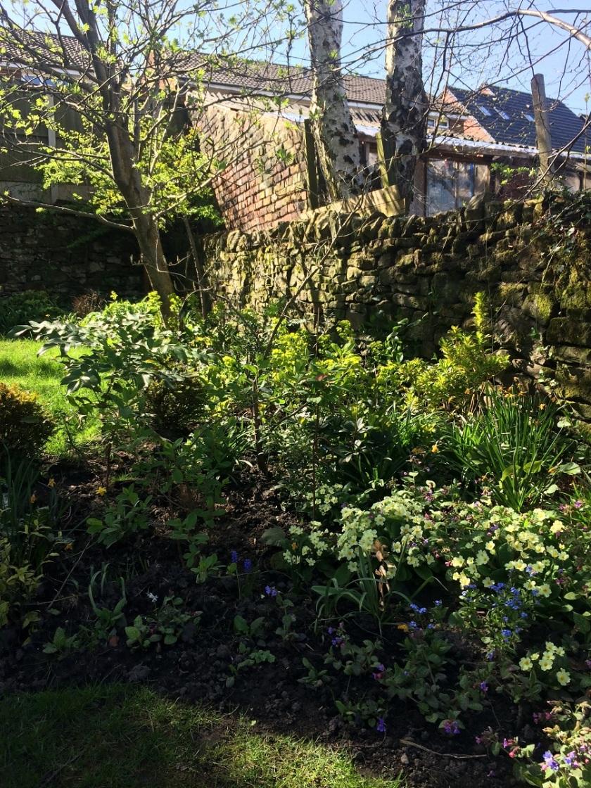 Lesley's garden 2 A