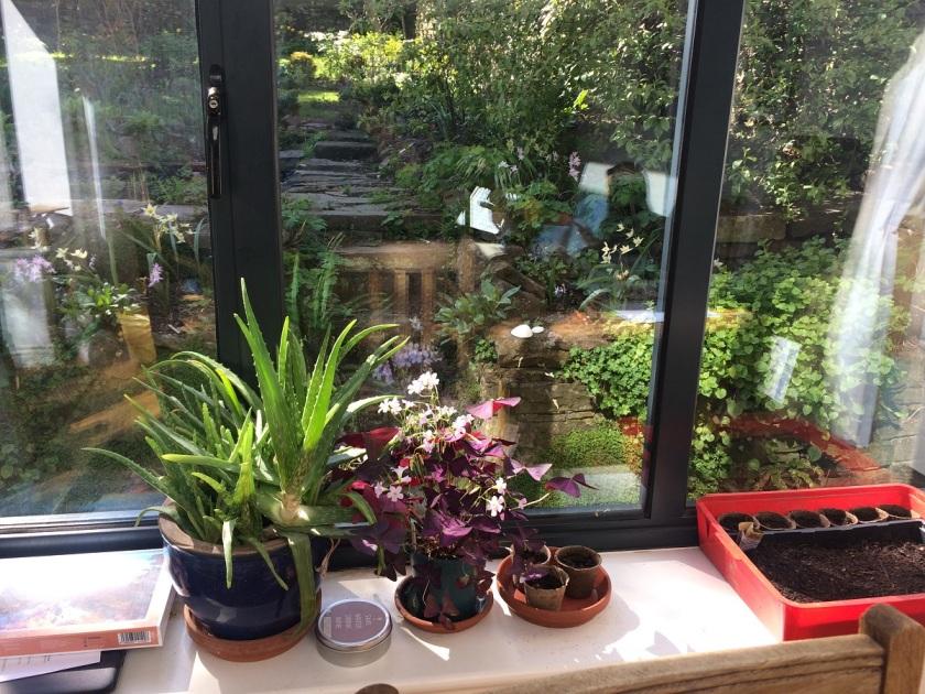Lesley's indoor garden A