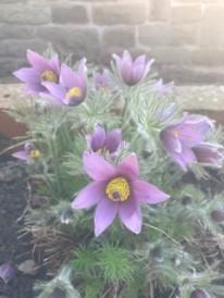 Sue's garden 3