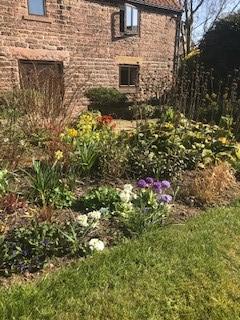 Sue's garden 5