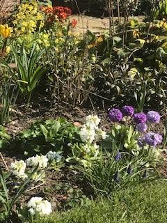 Sue's garden 7