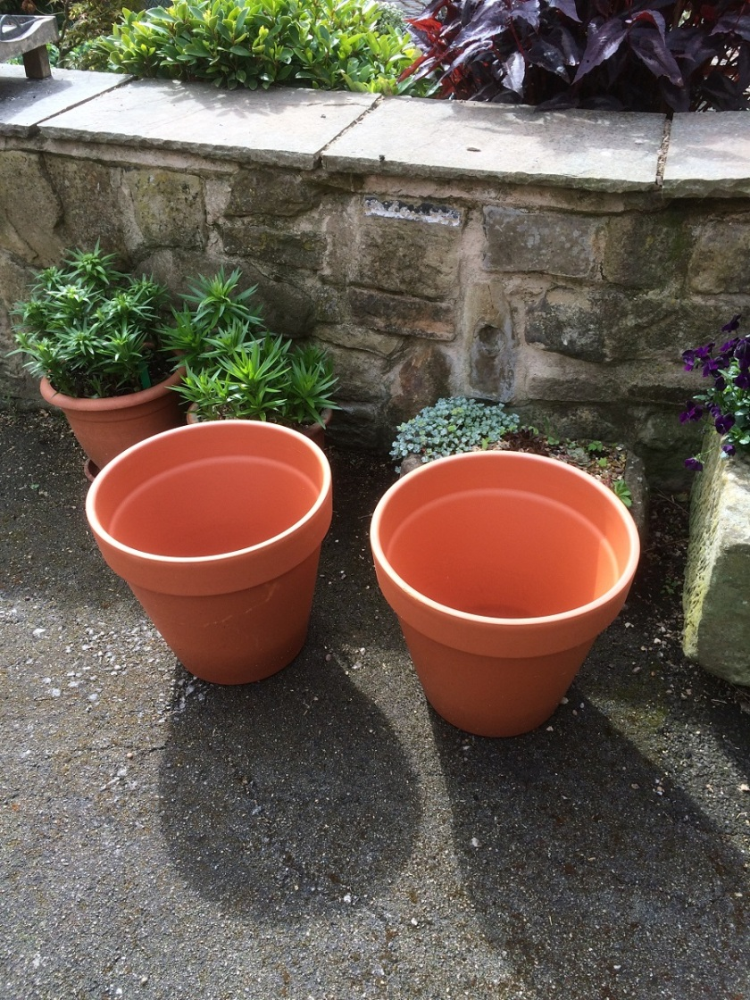 Glynis's pot bargains A