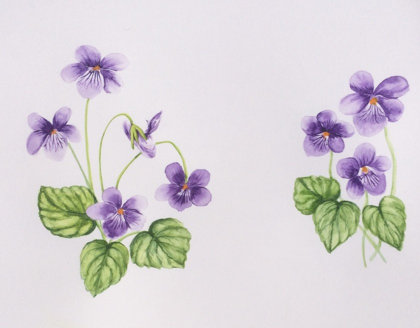 Glynis's Violets for Violet