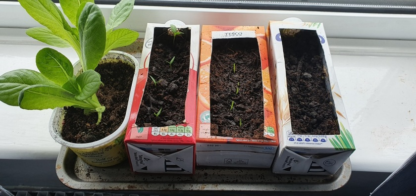 Julie's peppers, spring onions and cucumbers B