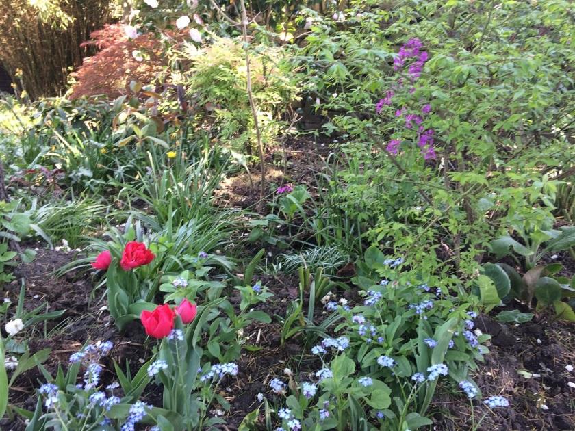 Lesley's Cottage Garden A