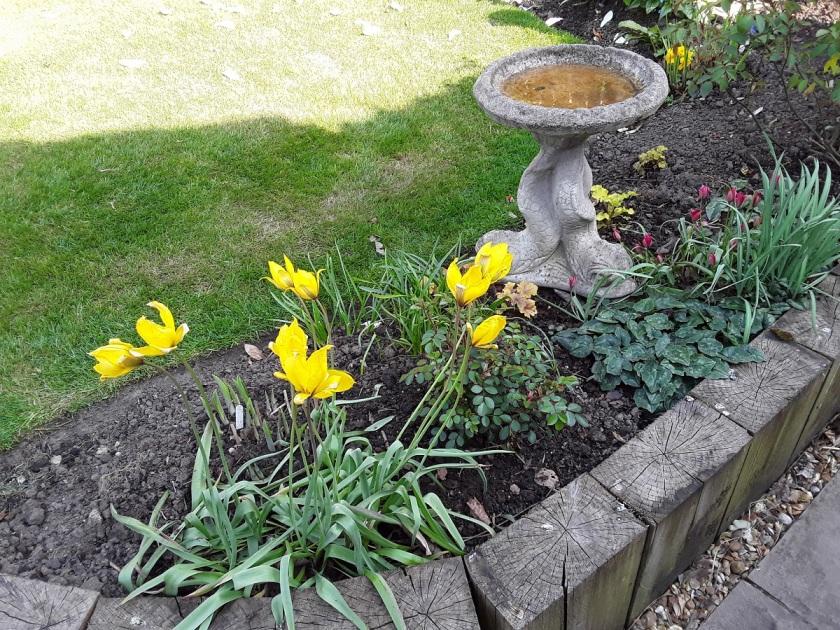 Meg's Garden 4 A
