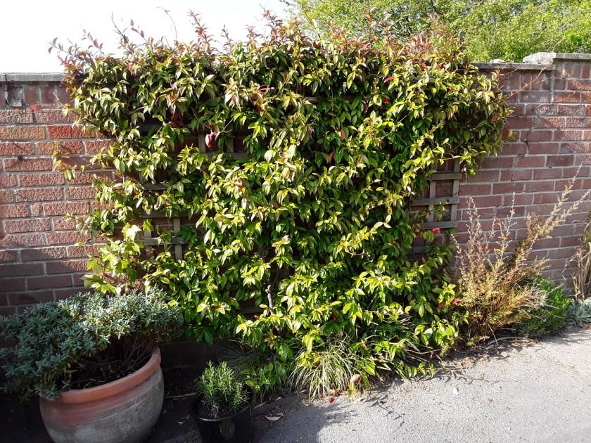 Meg's Garden 5 A