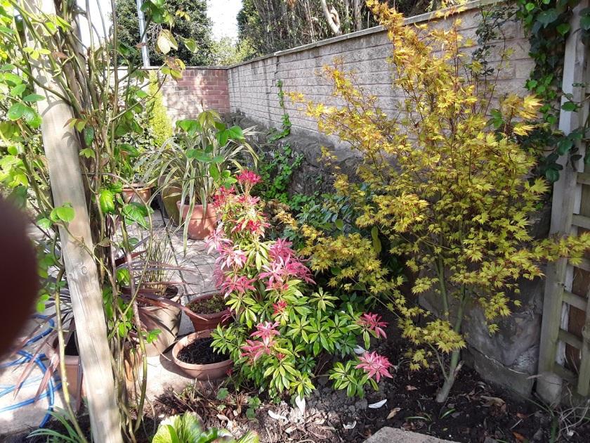 Meg's Garden 7 A