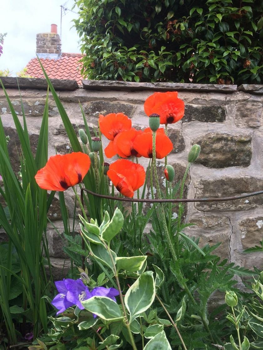 Glynis's Garden 1 A