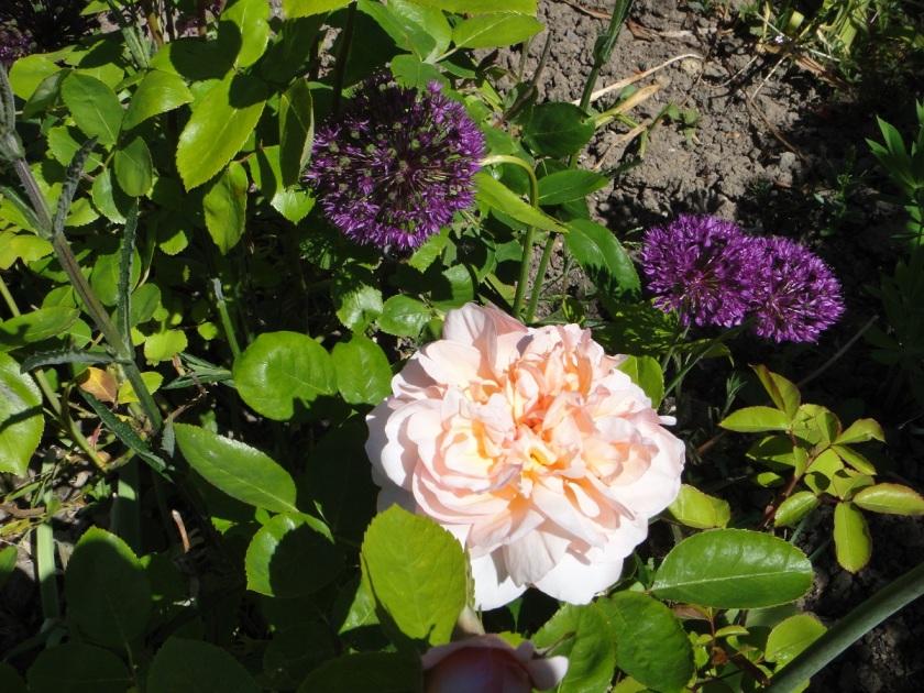 Jo's The Lady Gardener 4 A