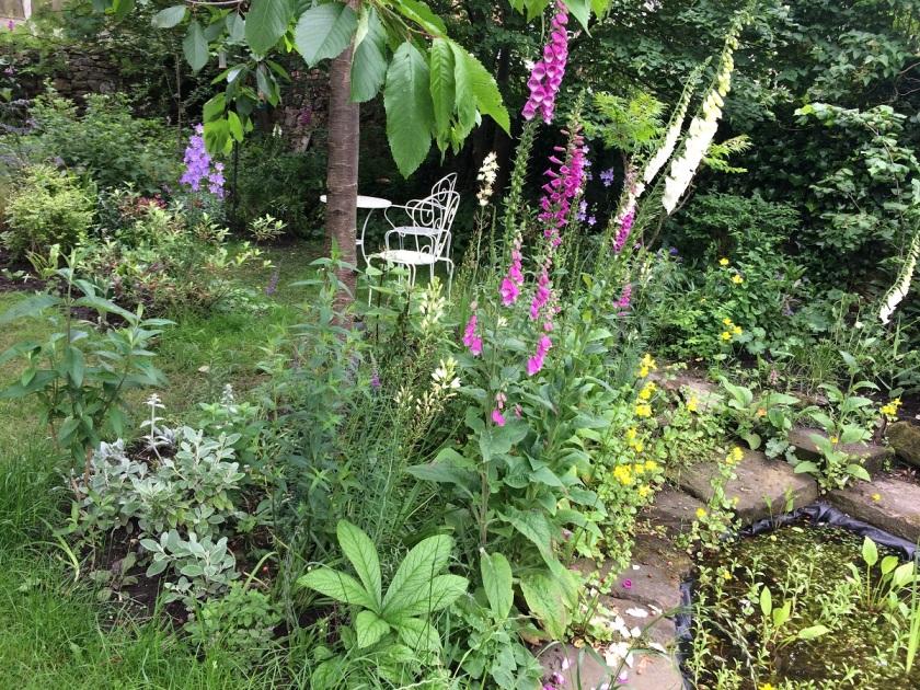Lesley's garden A