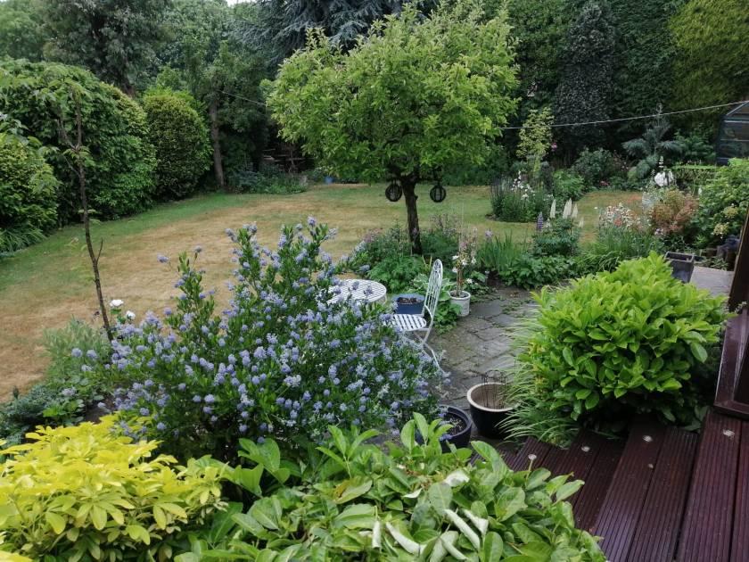 Pauline's Garden 1