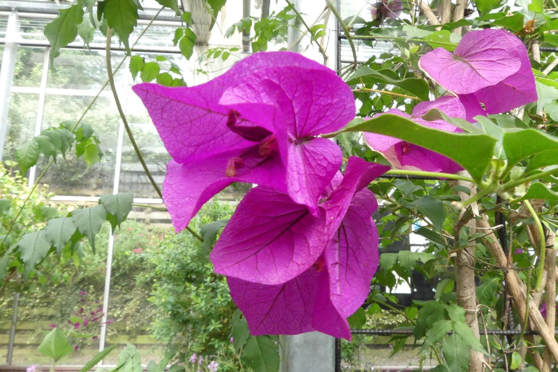 Hugh's Dorothy Clive Garden (66)
