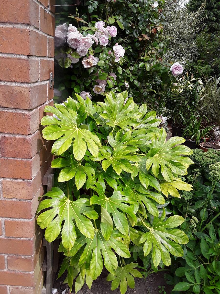 Meg's foliage 10 A