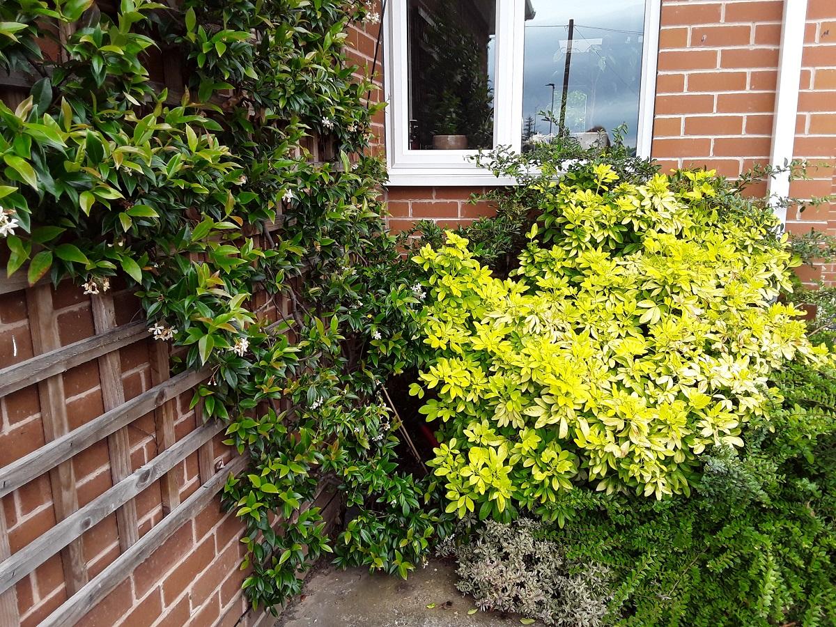 Meg's foliage 6 A