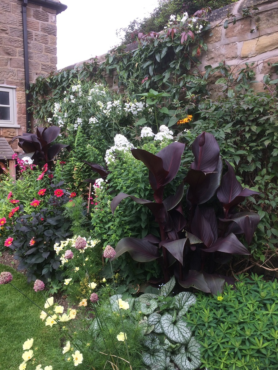 Glynis's Garden August 2 A