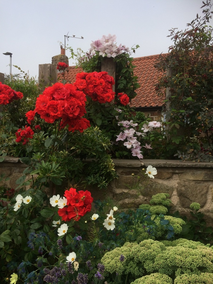 Glynis's Garden August 3 A