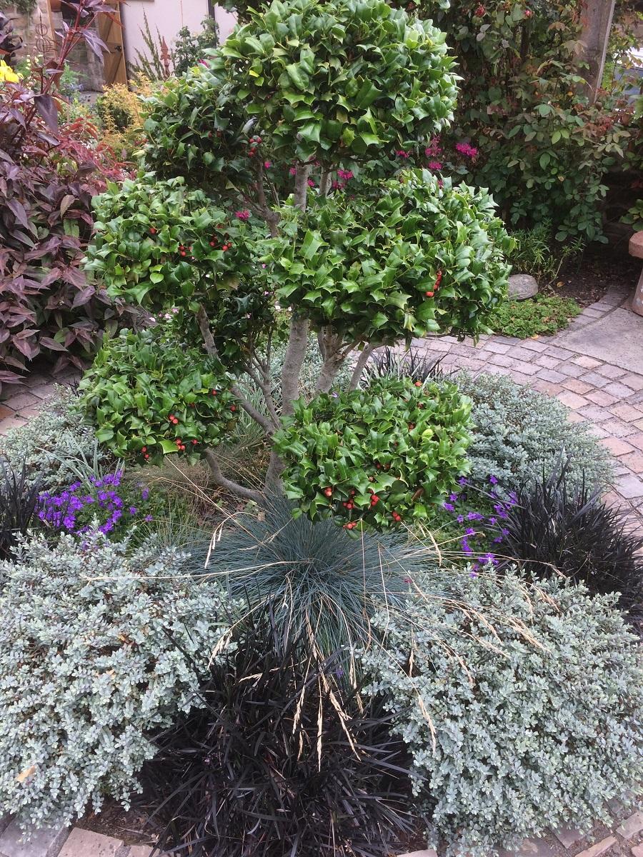 Glynis's Garden August 4 A