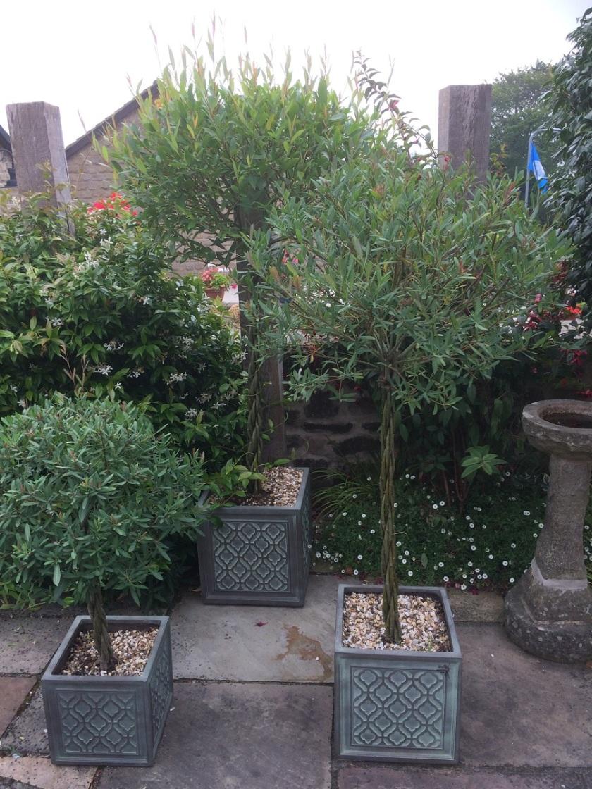 Glynis's Garden August 5 A
